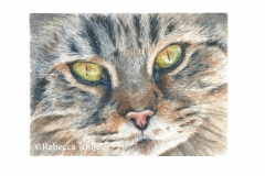 watercolor-cat-b-rebecca_rhodes