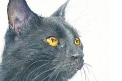 watercolor-cat-black-b-rebecca_rhodes