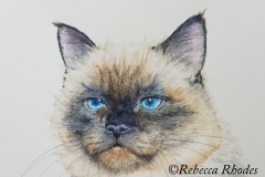 watercolor-cat-mad-b-rebecca_rhodes