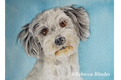 watercolor-dog-aussiedoodle-b-rebecca_rhodes