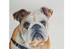 watercolor-english-bulldog-b-rebecca_rhodes