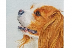 watercolor-king-charles-spaniel-b-rebecca_rhodes