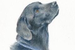 watercolor-labrador-retriever-black-c-rebecca_rhodes
