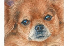watercolor-long-haired-chihuahua-b-rebecca_rhodes