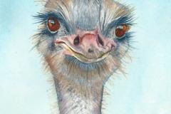 watercolor-ostrich-b-rebecca_rhodes