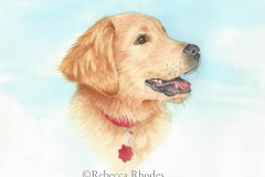watercolor-puppy-golden-retriever-a-rebecca_rhodes