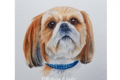 watercolor-shihtzu-dog-b-rebecca_rhodes