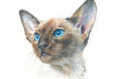 watercolor-siamese-cat-c-rebecca_rhodes