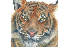 watercolor-tiger-b-rebecca_rhodes