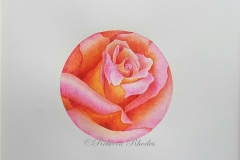 watercolor-yellow-pink-rose-c-rebecca_rhodes