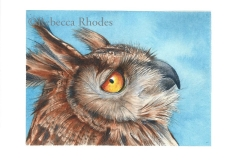 world-watercolor-month-1a-owl-rebecca_rhodes