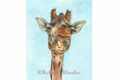 world-watercolor-month-3a-giraffe-rebecca_rhodes