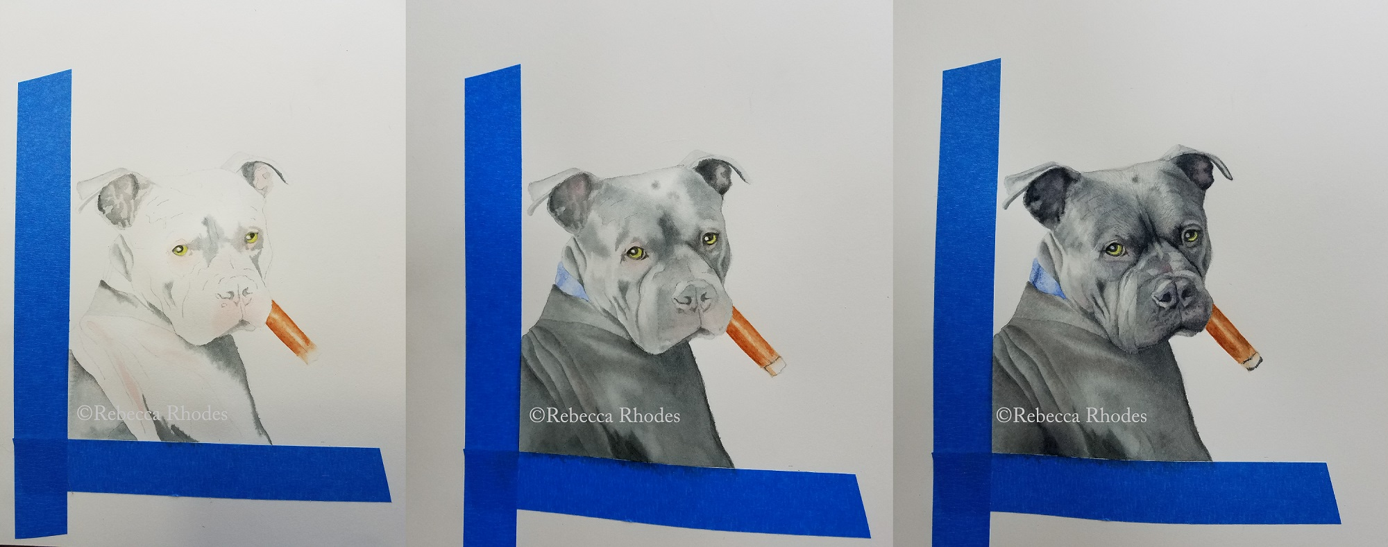 Step by step watercolor pit bull by Rebecca Rhodes