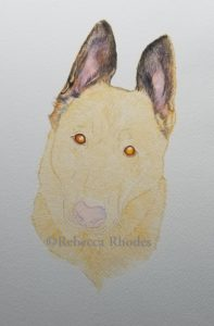 watercolor WIP pet portrait - German Shepherd by Rebecca Rhodes