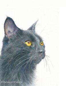 black cat in watercolor by rebecca rhodes