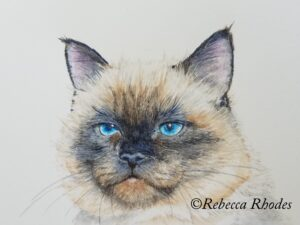 watercolor cat by rebecca rhodes