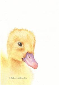 watercolor fuzzy duckling by rebecca rhodes