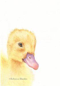 watercolor fuzzy duckling by rebecca rhodes
