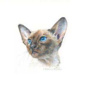 watercolor Siamese cat by Rebecca Rhodes