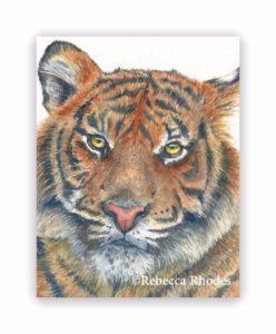 watercolor tiger by rebecca rhodes
