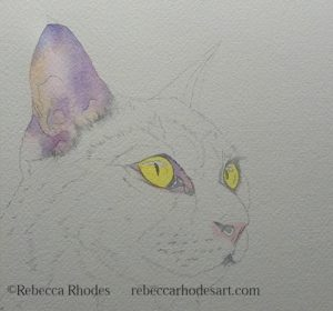 WIP black cat in watercolor by rebecca rhodes