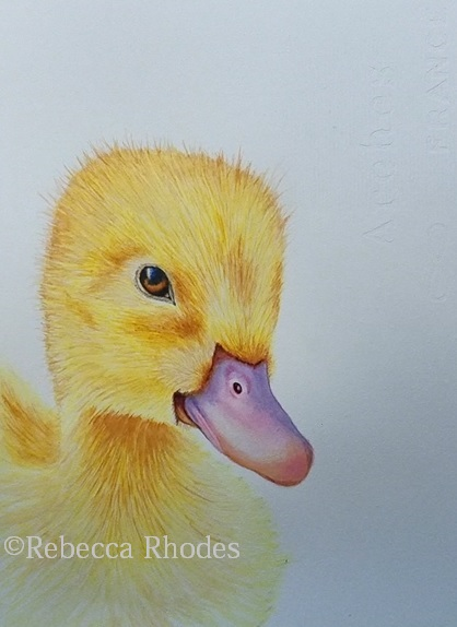 How to Paint a Baby Duck in Watercolor