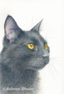 How to Paint a Black Cat in Watercolor by Rebecca Rhodes
