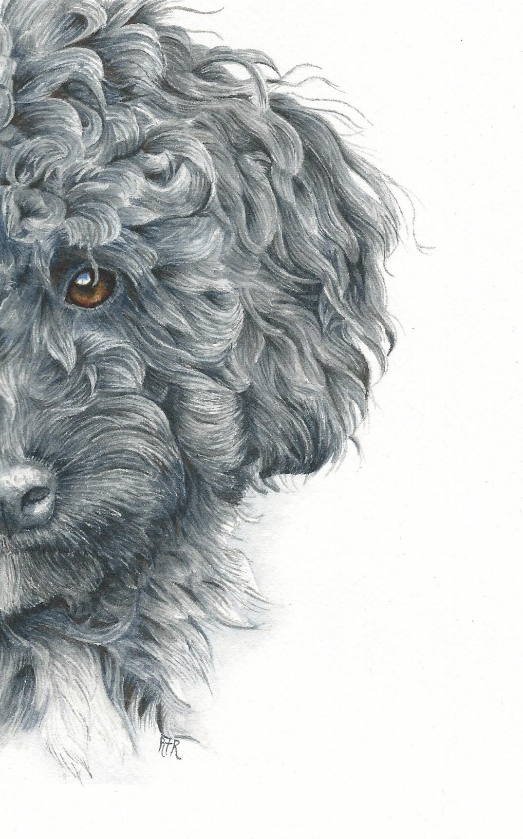 How to paint a curly haired poodle in watercolor rebecca