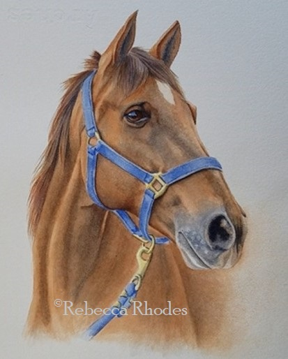 Realistic Horse Drawing Reference